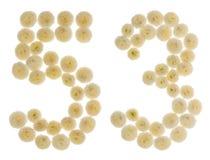 Arabiskt tal 53, femtiotre, från kräm- blommor av chrysanthe Arkivbilder