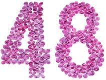 Arabiskt tal från 48, fyrtioåtta, blommar av lila, isolerat Royaltyfri Foto