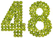 Arabiskt tal 48, fyrtioåtta, från gröna ärtor som isoleras på whi Royaltyfri Bild