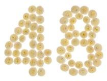 Arabiskt tal 48, fyrtioåtta, från kräm- blommor av chrysanthe Arkivbilder