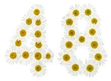 Arabiskt tal 48, fyrtioåtta, från vita blommor av kamomillen, Royaltyfri Fotografi