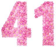 Arabiskt tal 41, fyrtio en, från rosa förgätmigej blommar, I Royaltyfria Foton
