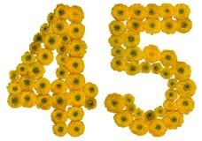 Arabiskt tal 45, fyrtiofem, från gula blommor av smörblomman, Fotografering för Bildbyråer