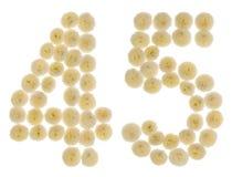 Arabiskt tal 45, fyrtiofem, från kräm- blommor av chrysanthem Royaltyfria Bilder