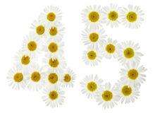 Arabiskt tal 45, fyrtiofem, från vita blommor av kamomillen, Royaltyfria Bilder