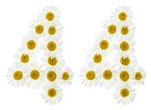 Arabiskt tal 44, fyrtiofyra, från vita blommor av kamomillen, Royaltyfria Foton