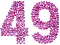 Arabiskt tal 49, fyrtionio, från blommor av lilan, isolerade nolla Arkivfoton