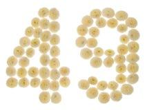Arabiskt tal 49, fyrtionio, från kräm- blommor av chrysanthem Arkivfoto