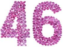 Arabiskt tal 46, fyrtiosex, från blommor av lilan som isoleras på Arkivbild