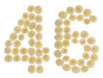 Arabiskt tal 46, fyrtiosex, från kräm- blommor av chrysanthemuen Arkivbilder