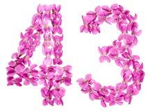 Arabiskt tal 43, fyrtiotre, från blommor av altfiolen som isoleras Royaltyfria Bilder