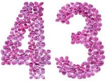 Arabiskt tal 43, fyrtiotre, från blommor av lilan som isoleras Royaltyfri Foto