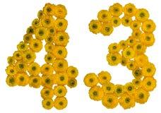 Arabiskt tal 43, fyrtiotre, från gula blommor av smörblomman Royaltyfria Foton