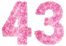 Arabiskt tal 43, fyrtiotre, från rosa förgätmigej blommar, Arkivfoto