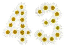 Arabiskt tal 43, fyrtiotre, från vita blommor av kamomillen, Arkivfoton