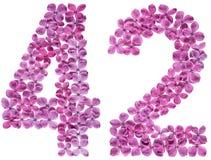 Arabiskt tal 42, fyrtiotvå, från blommor av lilan som isoleras på Royaltyfri Bild