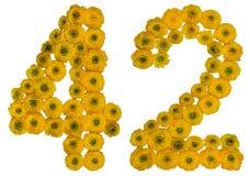 Arabiskt tal 42, fyrtiotvå, från gula blommor av smörblomman, Royaltyfria Foton