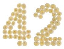 Arabiskt tal 42, fyrtiotvå, från kräm- blommor av chrysanthemuen Arkivbild