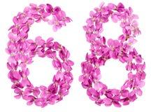 Arabiskt tal 68, sextioåtta, från blommor av altfiolen som isoleras Royaltyfri Bild