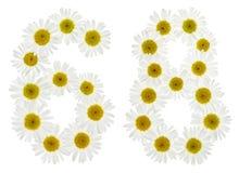 Arabiskt tal 68, sextioåtta, från vita blommor av kamomillen, Royaltyfri Bild