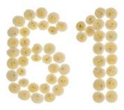Arabiskt tal 61, sextio en, från kräm- blommor av chrysanthemuen Arkivfoton