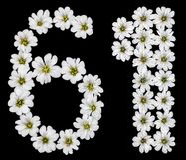 Arabiskt tal 61, sextio en, sextio, sex, ett, från den vita blomman Arkivbilder