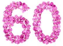 Arabiskt tal 60, sextio, från blommor av altfiolen som isoleras på whi Royaltyfri Bild
