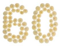 Arabiskt tal 60, sextio, från kräm- blommor av krysantemumet, I Arkivfoto