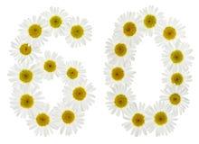 Arabiskt tal 60, sextio, från vita blommor av kamomillen, isola Royaltyfria Foton