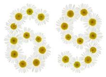 Arabiskt tal 69, sextionio, från vita blommor av kamomillen, Arkivbild