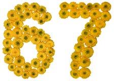 Arabiskt tal 67, sextiosju, från gula blommor av smörblomman Royaltyfri Bild