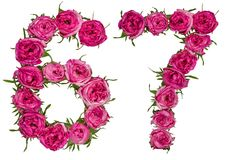 Arabiskt tal 67, sextiosju, från röda blommor av steg, isolat Royaltyfria Bilder