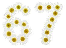 Arabiskt tal 67, sextiosju, från vita blommor av kamomillen, Arkivfoton