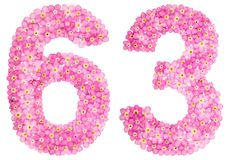 Arabiskt tal 63, sextiotre, från rosa förgätmigej blommar, Arkivbilder