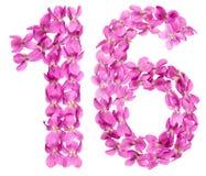 Arabiskt tal 16, sexton, från blommor av altfiolen som isoleras på w Fotografering för Bildbyråer