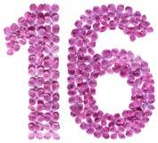 Arabiskt tal 16, sexton, från blommor av lilan som isoleras på w Royaltyfria Foton