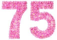 Arabiskt tal 75, sjuttiofem, från rosa förgätmigej blommar royaltyfri foto