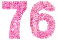 Arabiskt tal 76, sjuttiosex, från rosa förgätmigej blommar, Royaltyfri Bild