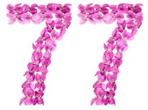 Arabiskt tal 77, sjuttiosju, från blommor av altfiolen, isolat Arkivbilder