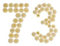 Arabiskt tal 73, sjuttiotre, från kräm- blommor av chrysant Royaltyfri Bild