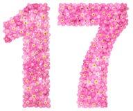 Arabiskt tal 17, sjutton, från rosa förgätmigej blommar, I Royaltyfria Foton