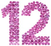 Arabiskt tal 12, tolv, från blommor av lilan som isoleras på wh Royaltyfri Bild
