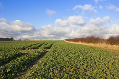 Arable crops in autumn Stock Photography