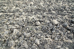 Arable earth. In autumn after harvesting Stock Photography