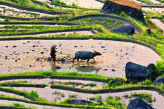 Arable farmers. This is China's famous Zhejiang Yunhe County clouds and terraces Stock Photography