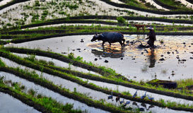 Arable farmers. Clouds and terraces in Cloud County, Zhejiang, China captured June 7, 2016 Stock Images