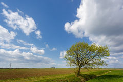 Arable Farmland in Cambridgeshire. On a Sunny Spring Day Stock Images