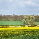 Arable Farmland in Cambridgeshire. On a Sunny Spring Day Royalty Free Stock Photography
