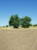 Arable field. Black arable soil at autumn after harvest Stock Photos