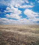 Arable field. Against the sky with clouds Royalty Free Stock Photos